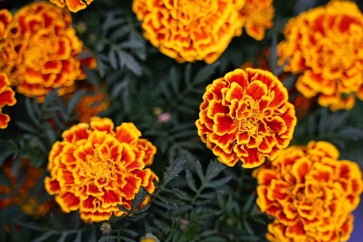 No People No Person Day Flower Flower Head Biology Close-up Plant Flowering Plant Botanical Garden Tropical Flower Plant Part Living Organism