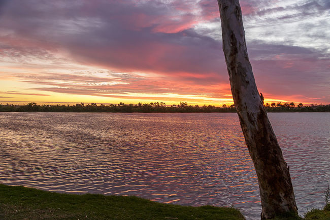 Sunset on the Murray Campinglife Cloud Formation Lake Landscape Natural Condition Orange Color Setting Sun. Sky South Australian Outback Sunset Tailem Bend Tree Trunk Water