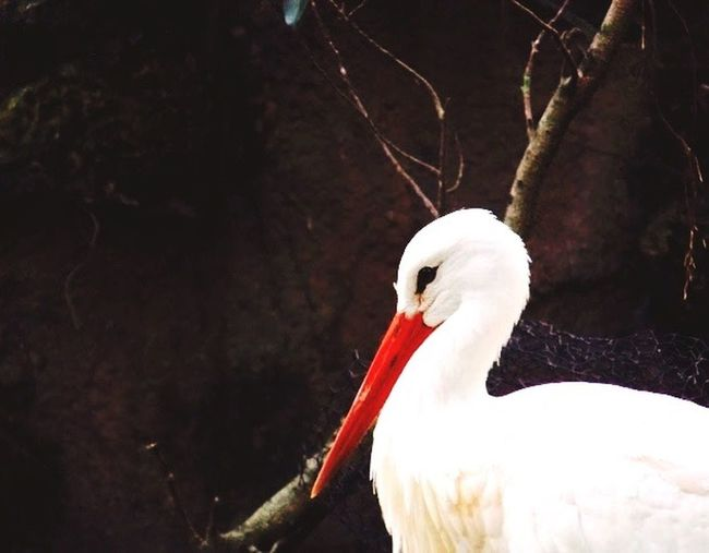 Peacefull bird First Eyeem Photo