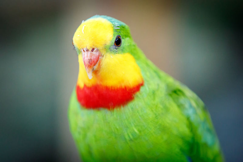 Ein bisschen Farbe für graue Tage ;-) Animal Themes Animal Wildlife Animals In The Wild Beak Beauty In Nature Bird Close-up Day Focus On Foreground Green Color Multi Colored Nature No People One Animal Outdoors Parrot Rainbow Lorikeet Red Yellow