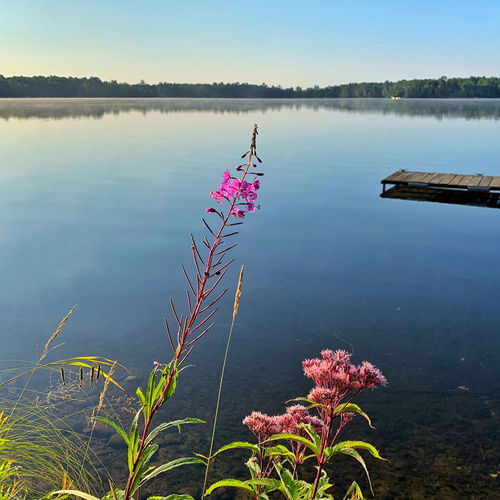 Pink flowering plants by lake against sky