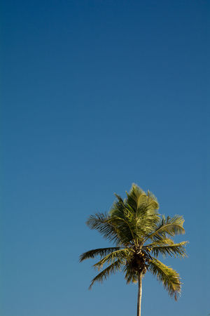 Coconut Tree shaping the Sky in Bahia, Brazil Bahia Beach Beauty In Nature Blue Brazil Clear Sky Coconut Tree EyeEm Brasil Green Idyllic Nature Nature Outdoors Porto Seguro Praia Scenics Sky Trancoso Tranquility Tree Showcase July