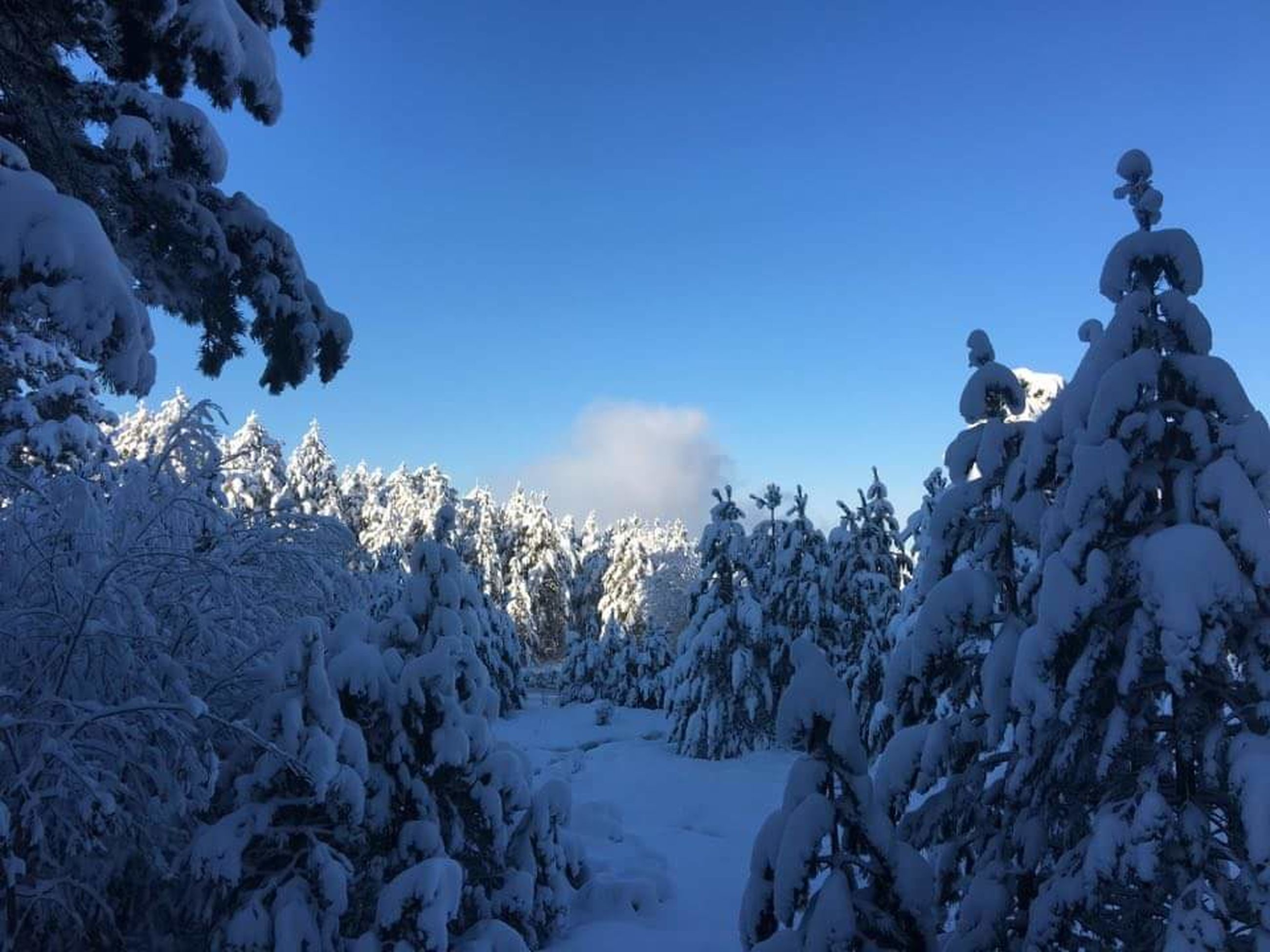 snow, winter, cold temperature, season, weather, tranquility, tranquil scene, beauty in nature, mountain, scenics, covering, snowcapped mountain, nature, blue, frozen, clear sky, landscape, white color, tree, sky