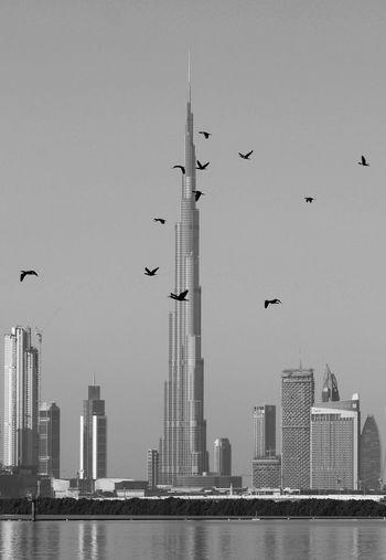 Place where birds fly horizontally and people go vertically Downtowndubai Dubai UAE EyeEmReady Burjkalifa Black&white Blackandwhite City Cityscape Dubaicreek