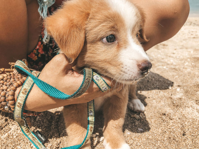 Puppy Mammal One Animal Canine Domestic Animals Dog Pets Animal Themes Domestic Animal Vertebrate Day Looking Away Sunlight Looking Brown Pet Leash Land Leash Pet Collar Nature Puppy Puppy Love Cute Puppy