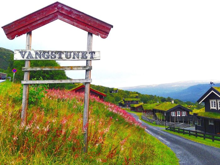 Vangstunet in Oppdal, Norway. Norway Oppdal Nature Flower Mountain Outdoors Plant No People Springtime Beauty In Nature First Eyeem Photo TakeoverContrast