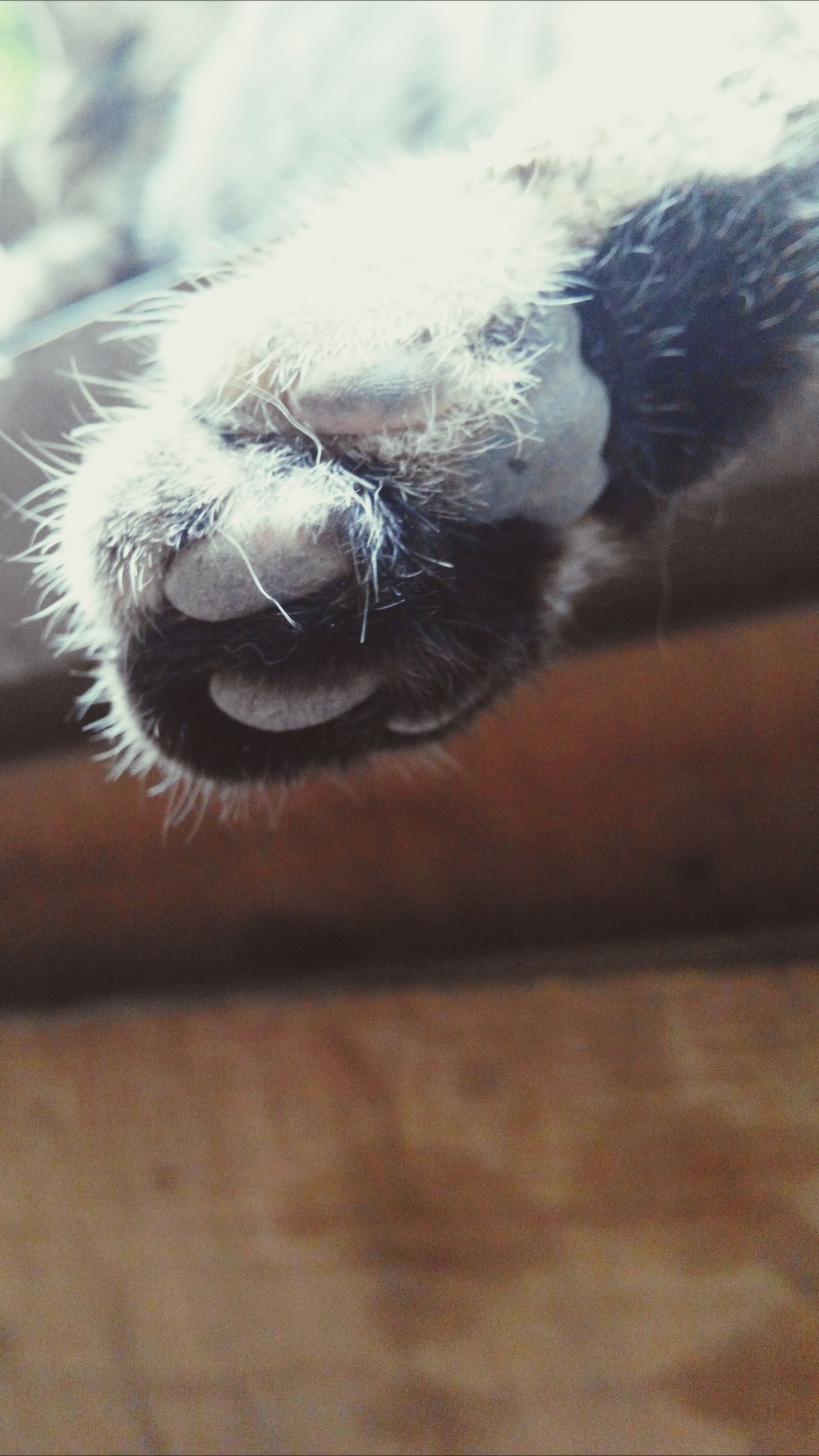 one animal, animal themes, close-up, pets, selective focus, indoors, domestic animals, focus on foreground, mammal, part of, animal body part, animal head, dog, one person, unrecognizable person, day, wildlife, cropped