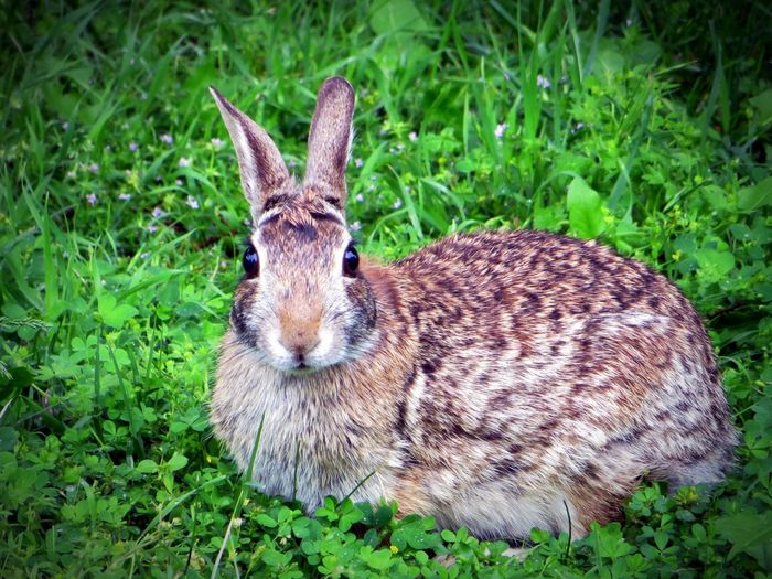 You've Got the Cutest Little Bunny Face Bunny  Bunny! Bunnyrabbit Rabbit Wildlife Nature Animalkingdom Imhuntingwabbits Capture The Moment
