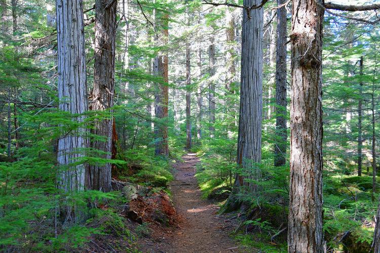 Waldweg Forest