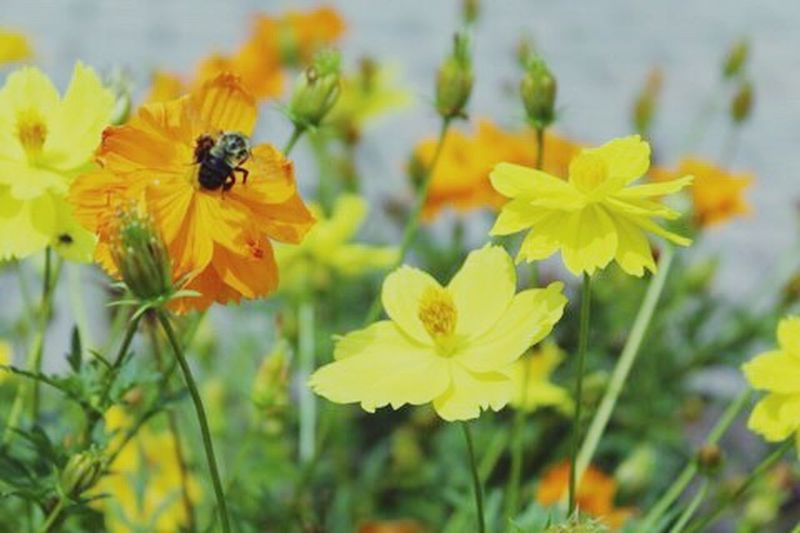 Beeandflower Summertime Color Soft Focus Photography Beauty In Nature