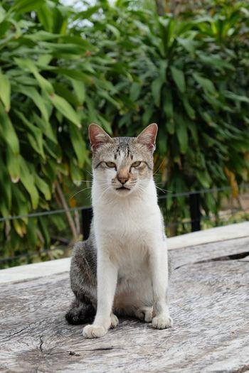 Portrait of cat relaxing on boardwalk