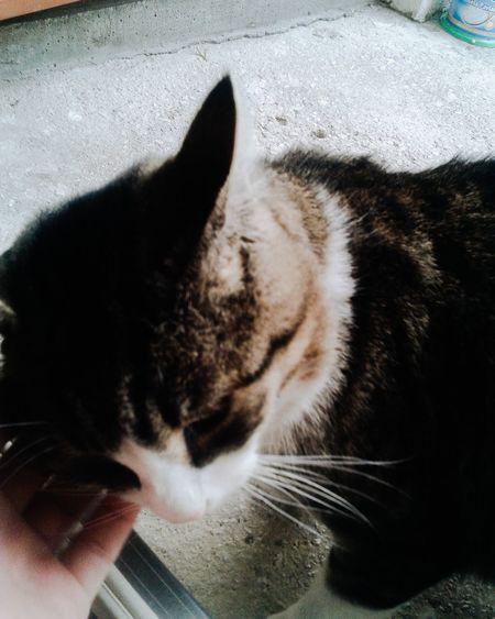 Cute thing. Part 2 Catstar #cat #catnap #catoftheday #catpic #catlovers #catsconnect #catinstagram #catsofinstagram #gato #gatinhos #gatto #garfield #petstagram #premierpet #photooftheday #petsofinstagram #picoftheday #petlovers #instabicho #ilovecats #ilovemypet #issovici Catsoftheworld Cute Cat Cute♡ Cute Animals Cute Pets Catstagram Catcatcat Catlovers Cats Of EyeEm Catsagram Catoftheday Cat♡ Catsofinstagram Cats Cat Lovers Cat