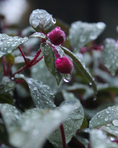 Close-up of wet flower plant
