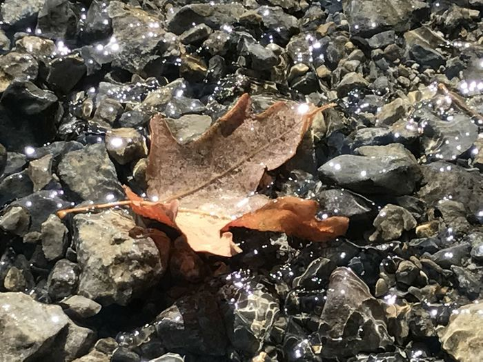Natures Watercolor Rays Of Water Sparkles In Autu The Flow Of Life Water Steps Into Fall Falling Leaves🍁 Glistening Water Outdoor Life