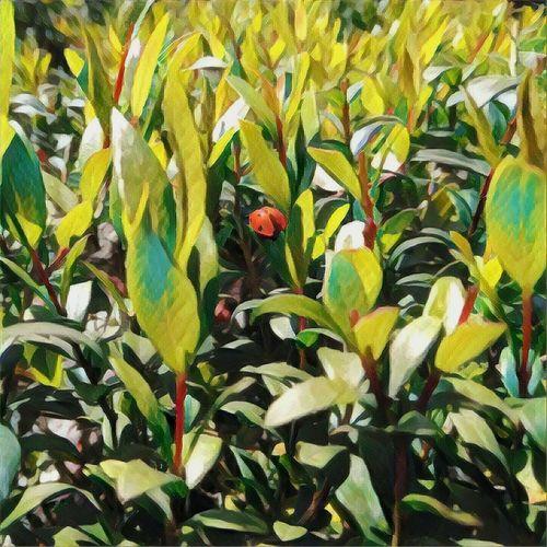 Spring life Ladybug🐞 Paintfilter Leaf Nature