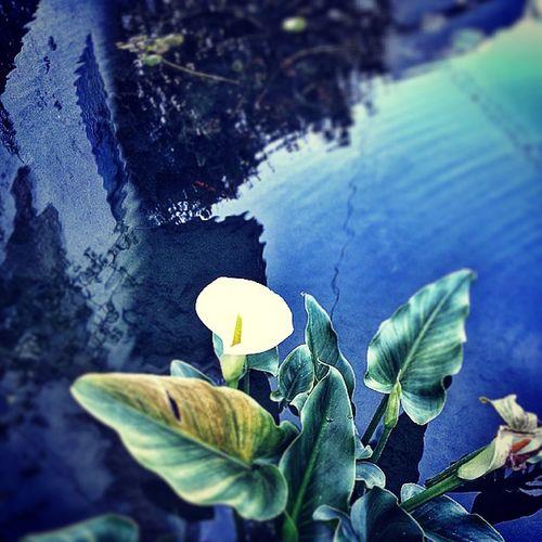 Cyprus Kyrenia Girne Karmi pool water reflection amazing beauty beautiful light hayat flower colorful