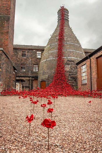 Poppies Weeping Window at Middleport Pottery Poppy Poppies  Weeping Window Weeping Window Poppies Middleport Pottery Red City Autumn Fruit Sky Architecture Building Exterior Blooming Tower Tall - High