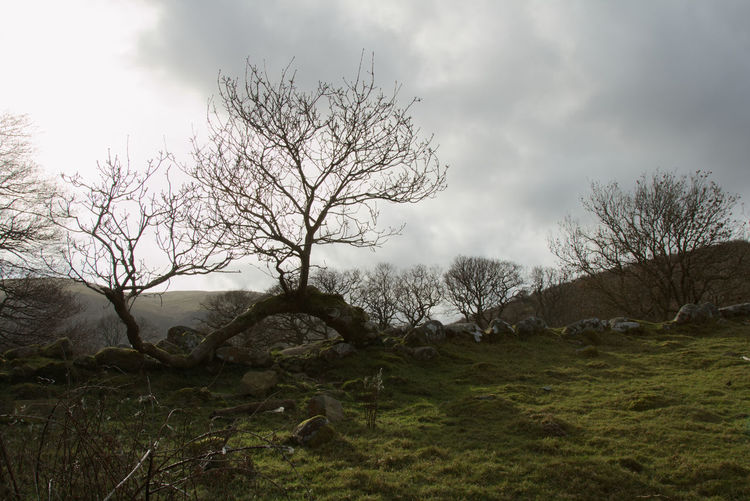 I just had to take a picture of this tree Wales Welsh Countryside Tree Sky Grass Landscape Cloud - Sky Single Tree Growing Overcast Tranquil Scene Tranquility Calm Countryside Atmospheric Mood