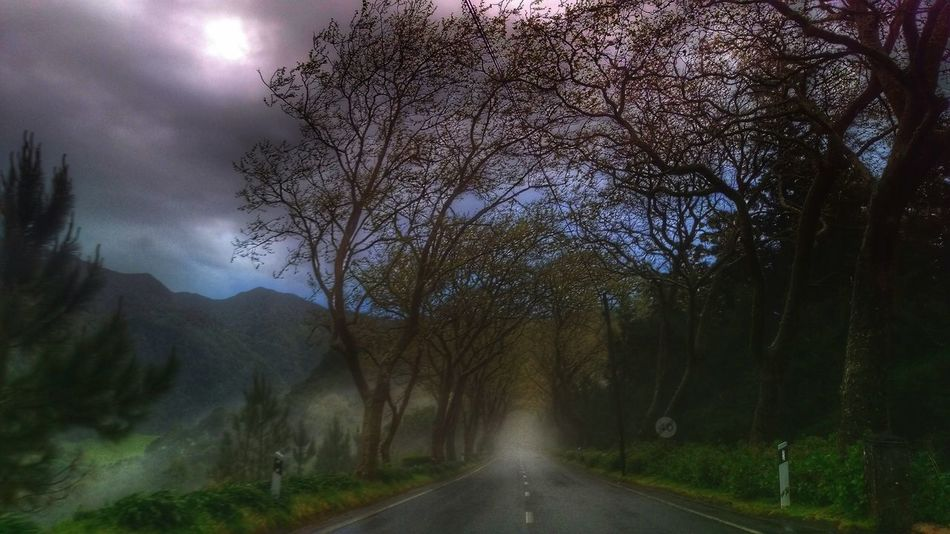 Foggy Morning Fog Fog_collection Foggy Landscape Fog_road Fogporn Nature Photography Onthetable Trees And Sky Mountains Natural Beauty Visitazores Povoação Furnas S.miguel Açores Açores - Portugal My Favorite Photo The Great Outdoors With Adobe The Great Outdoors - 2016 EyeEm Awards The Great Outdoors - 2017 EyeEm Awards