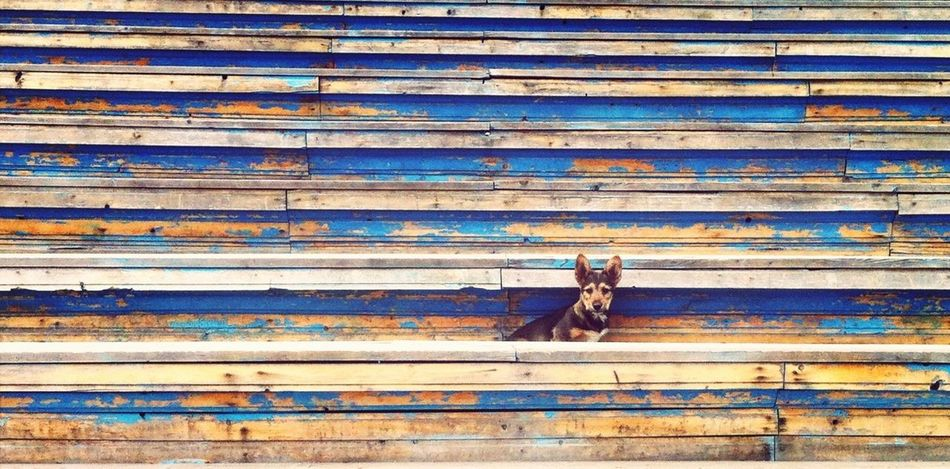 Summer Dog Stairs Stadium