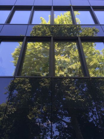 Spiegelungen Reflection Reflections Urban Reflections Tree Sky And Trees Treetastic Mirrored