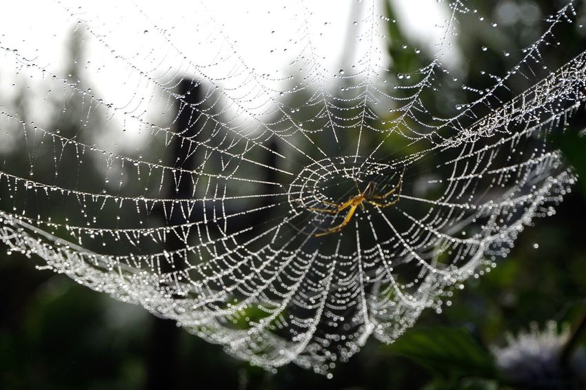 EyeEm Nature Lover My World Morning Dew Spider Spider's Web Nature On Your Doorstep Nature_collection 朝露 撮れたて朝の顔😊✨