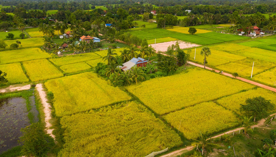 High angle view of agricultural field by houses and trees