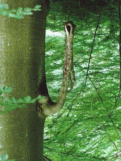 Ein Ganz Normaler Baum....oder Doch Nicht?😁 umgekehrt😉 Nature_collection Naturelovers Urban Nature 👍