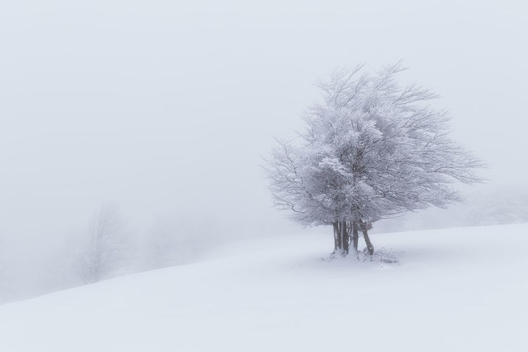 Tree on snow covered field against clear sky