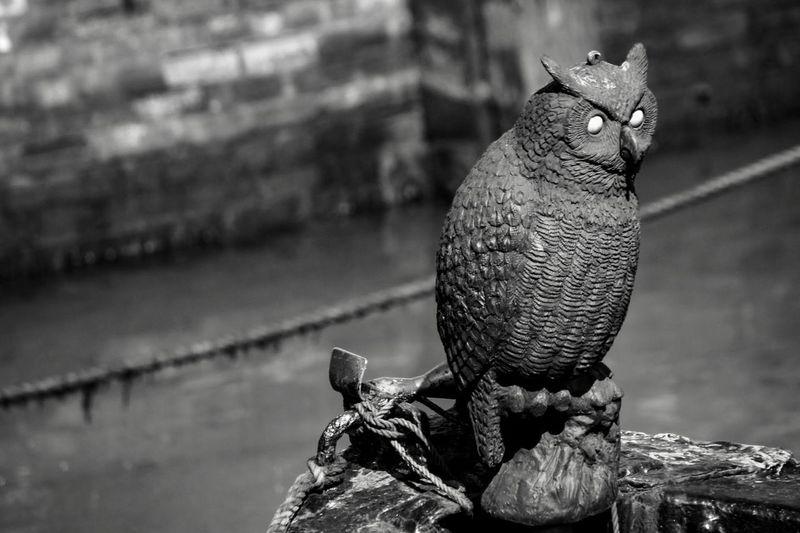 Wooden owl on
