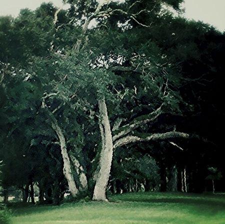My Favorite Tree Gotham Filter Dark Portrait Dark Art