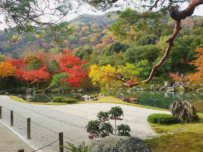Japan Giappone Zen Garden Zen Giardino Tenryuu-ji Temple Temple Tempio Japanese  Travel Backpacker Viaggiare Viaggio Nature Colorful Colors Natura Autumn Foliage Momiji Colori Arashiyama Happyness Photography Travel Photography EyeEmNewHere