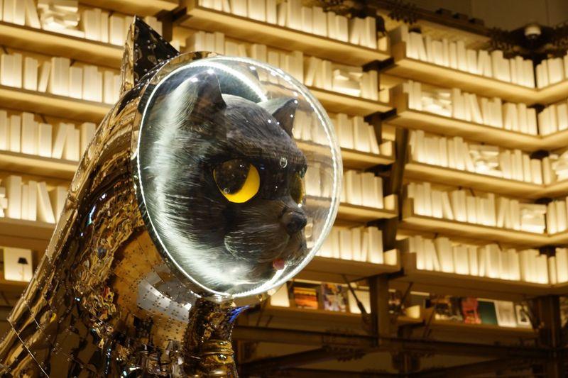 銀座シックス。蔦屋のイベント。ヤノベケンジ Day Animal Themes No People Close-up Indoors  Catstatue Cat Art EyeEm Masterclass EyeEm Best Shots Ginzasix Yanobekenji