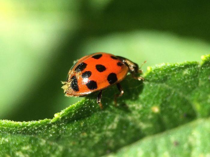 Ladybug Macro Photography Macro Beauty