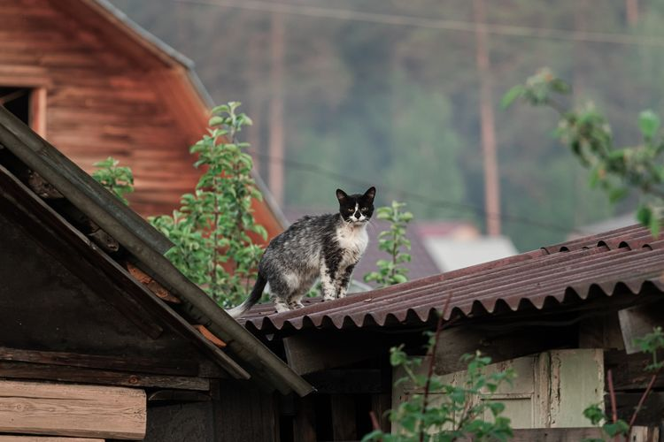 View of a cat on roof of building