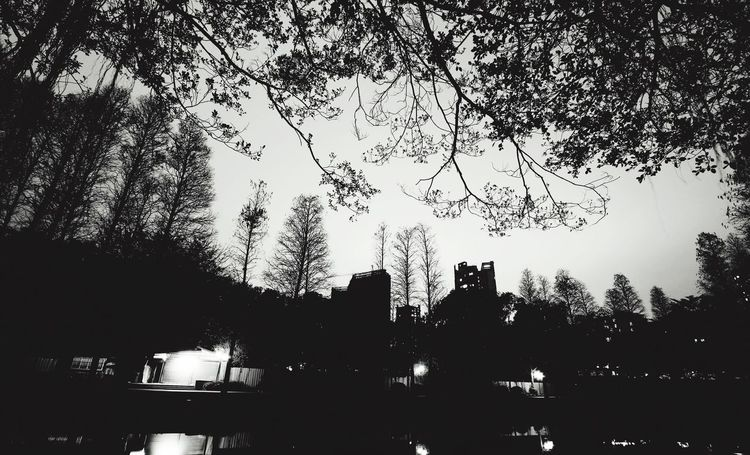 After Dark Check This Out EyeEm Eyeemmonochrome Fresh EyeEmMono EyeEm Black&white! EyeEm Best Shots - Landscape EyeEm Gallery Nature_collection Nature Nature At Night Nature And Lanscapes Trees Silhouette Silhouettes Sillouette Of Trees Tianhe Park Tianhe Guangzhou Guangzhou China Park Darkness And Light Nightphotography