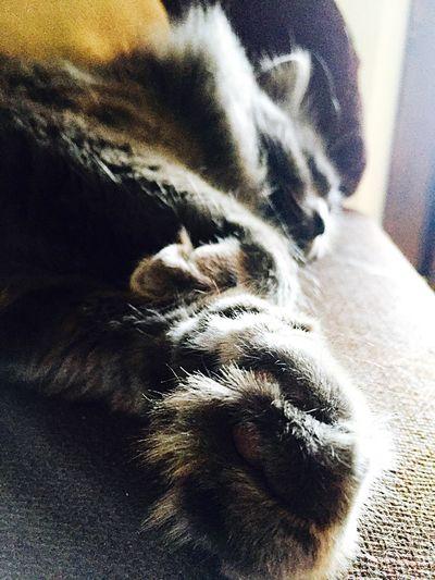Cat Cats Zufolo Chats Chat Gatto Gatti Cat Lovers