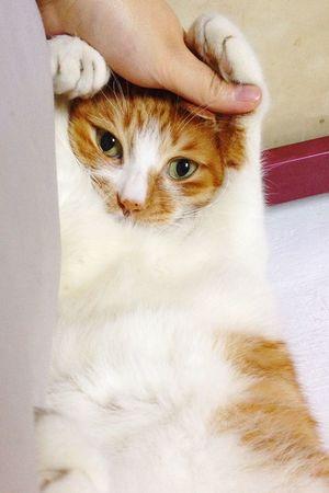 meow Cat Naughtycat