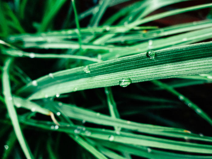Backgrounds Beauty In Nature Blade Of Grass Close-up Day Detail Focus On Foreground Fragility Grass Green Green Color Growth Macro Nature No People Outdoors Plant Selective Focus Tranquility Water