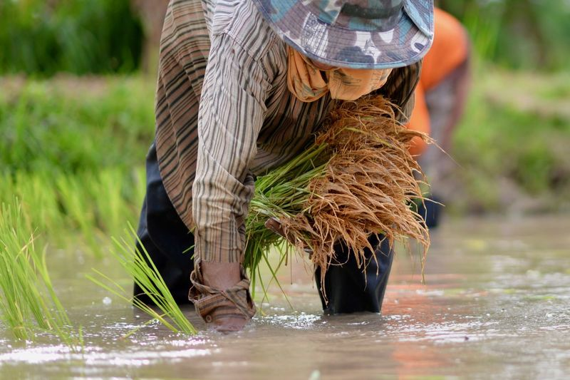 Man Standing In Water At Farm