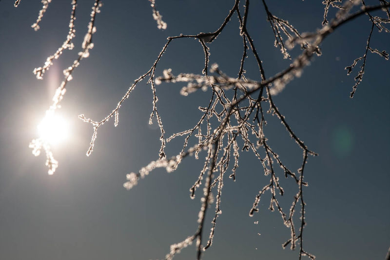 Low angle view of frosted bare tree against sky