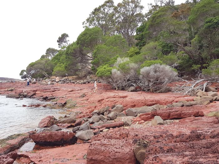 ancient red rocks formed in the Devonian period (360 million years ago) at Ben Boyd National Park near Eden on the NSW South Coast, Australia. Regional Regional Town Rock Rock Formation Geology Devonian Ben Boyd National Park Beach National Park Sapphire Coast New South Wales  Bittangabee Bay Australia Red Rocks  Coast Nsw Coastline Cliff Eroded Physical Geography Coastal Feature Ocean Rocky Coastline