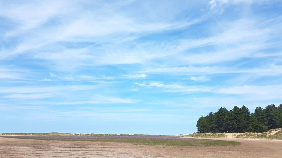 Cloud - Sky Tree Sky Blue Tranquility Day Outdoors No People Beach Scenics Nature Summer Beauty In Nature Landscape Norfolk Holkham Beach Holkham Outdoor Pursuit Growth Forest Tranquil Scene Freshness Beauty In Nature Nature Tree