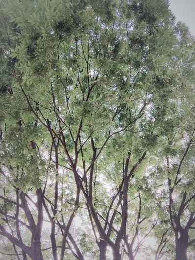 Sky Green Feelbad