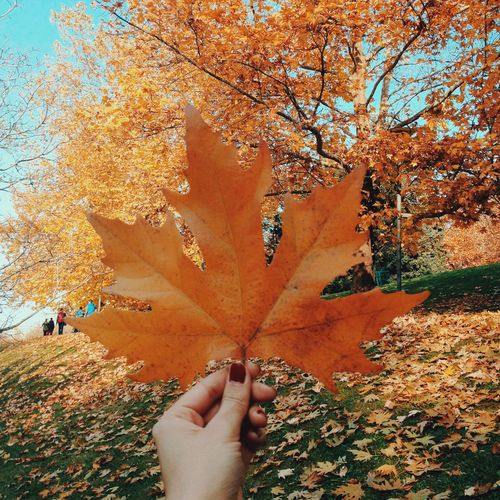 Perfect Match Showcase: November Autumn Autumn Colors Autumn Leaves Fall Fall Colors Traveling Ankara Turkey Chilling Check This Out Hanging Out EyeEm Best Edits Travel Photography EyeEm Best Shots The Week Of Eyeem From Where I Stand Walking Around Picnic EyeEmBestPics