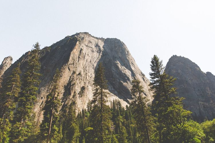 Yosemite National Park Mountain Nature Clear Sky Beauty In Nature Forest Scenics No People Mountain Range High Tree Outdoors Scenery Day Height Sky