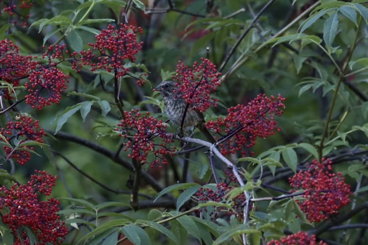 Red berries on plant