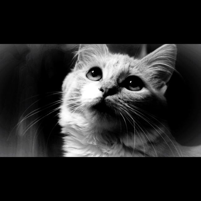 Thea. Taking Photos Check This Out Like This Blackandwhite Photography Eyes Cat Kitty Petphotography New
