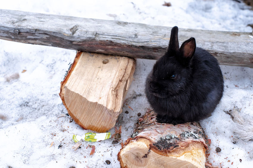50+ Rabbit - Animal Pictures HD | Download Authentic Images
