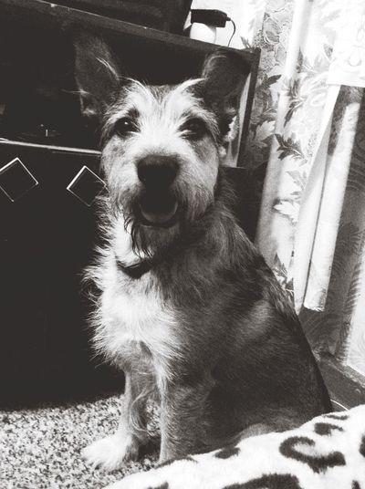 собака МояСобака пес люблюсвоюсобаку Dog Mydogs I Love My Dog My Dog Black And White Black & White